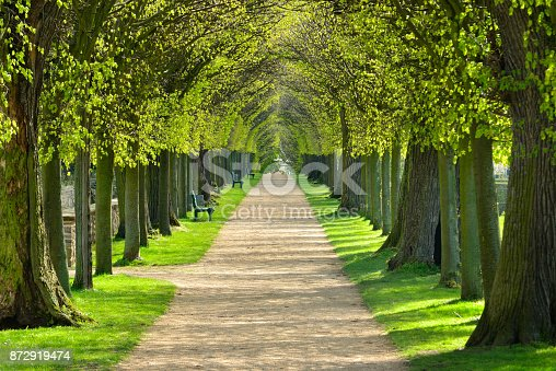istock Avenue of Linden Trees, Tree Lined Footpath through Park in Spring 872919474