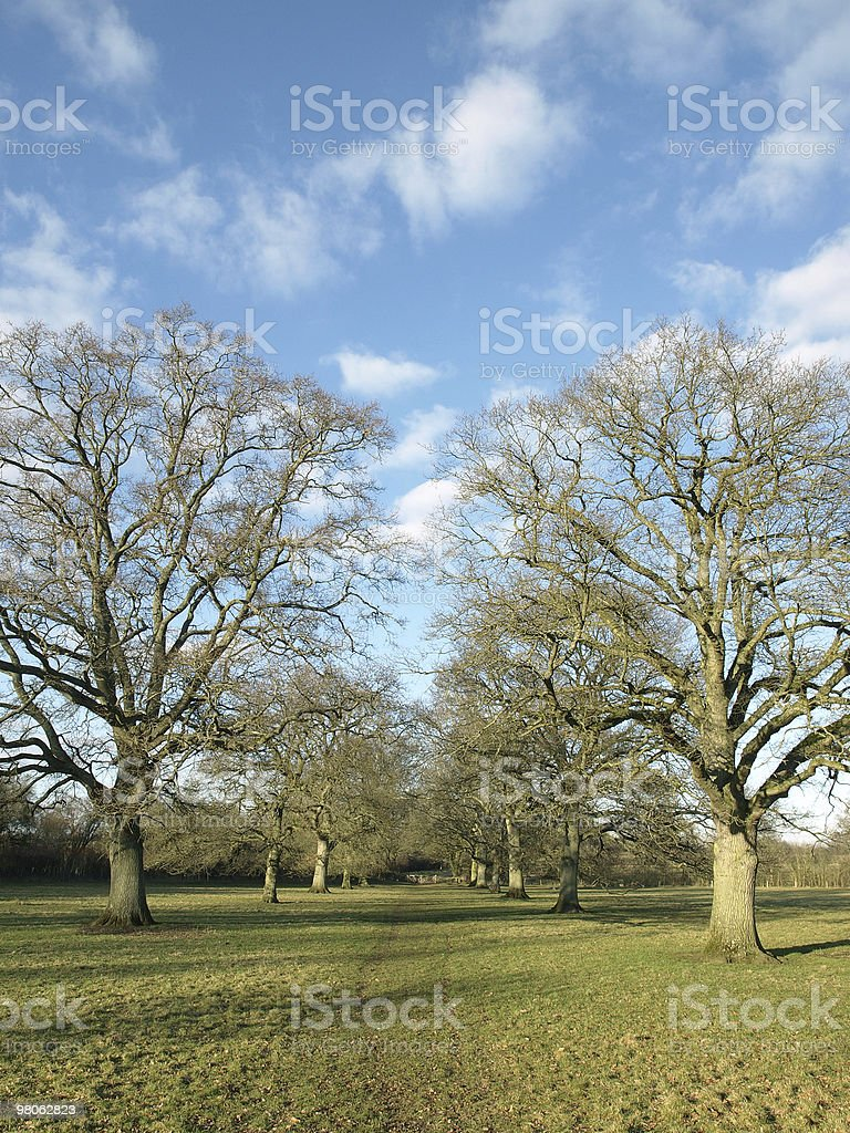 Avenue of Oaks royalty-free stock photo