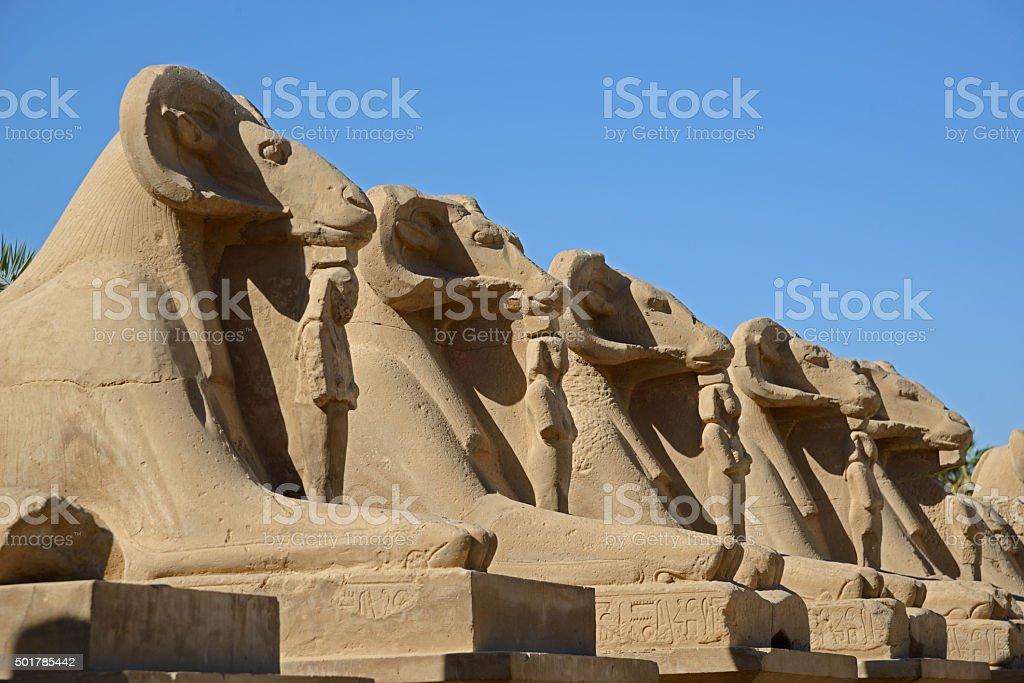 Avenue of sphinxes - Luxor stock photo