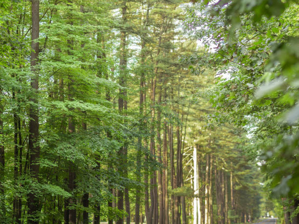 avenue of the pines, saratoga springs, new york - katiedobies stock pictures, royalty-free photos & images