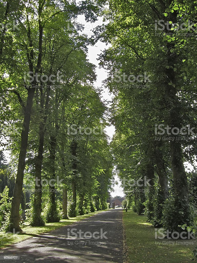 Avenue Of Trees 1 royalty-free stock photo