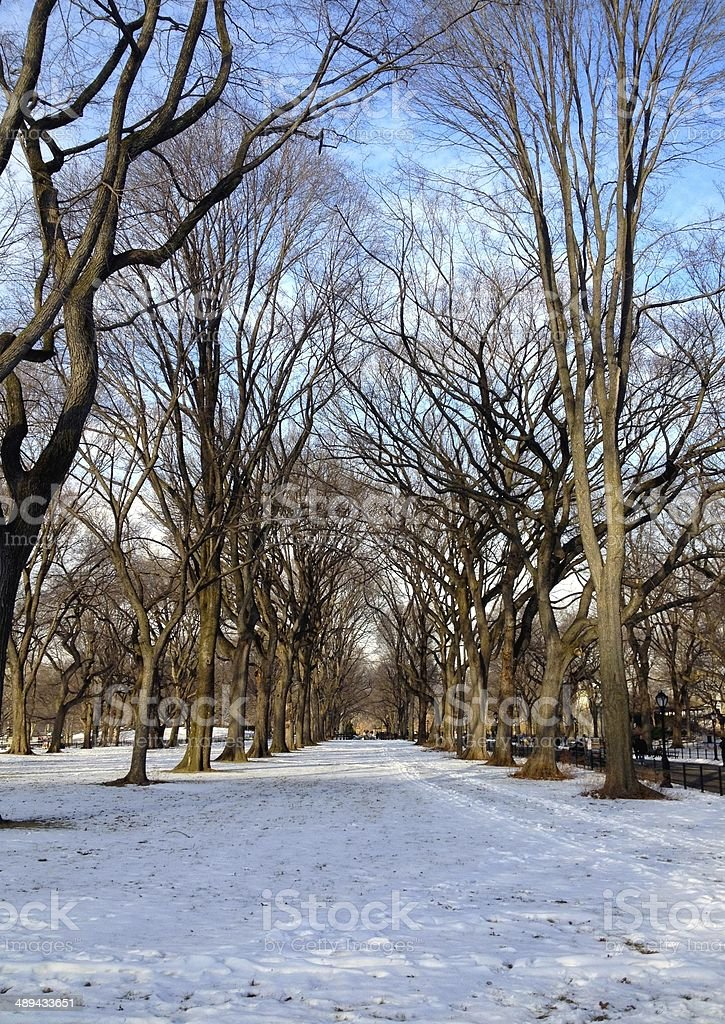 Avenue of trees during winter in Central Park royalty-free stock photo
