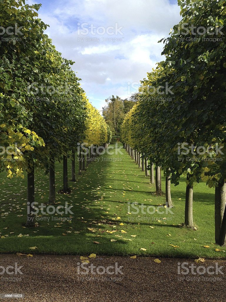 Avenue Of Trees In A Formal Garden stock photo