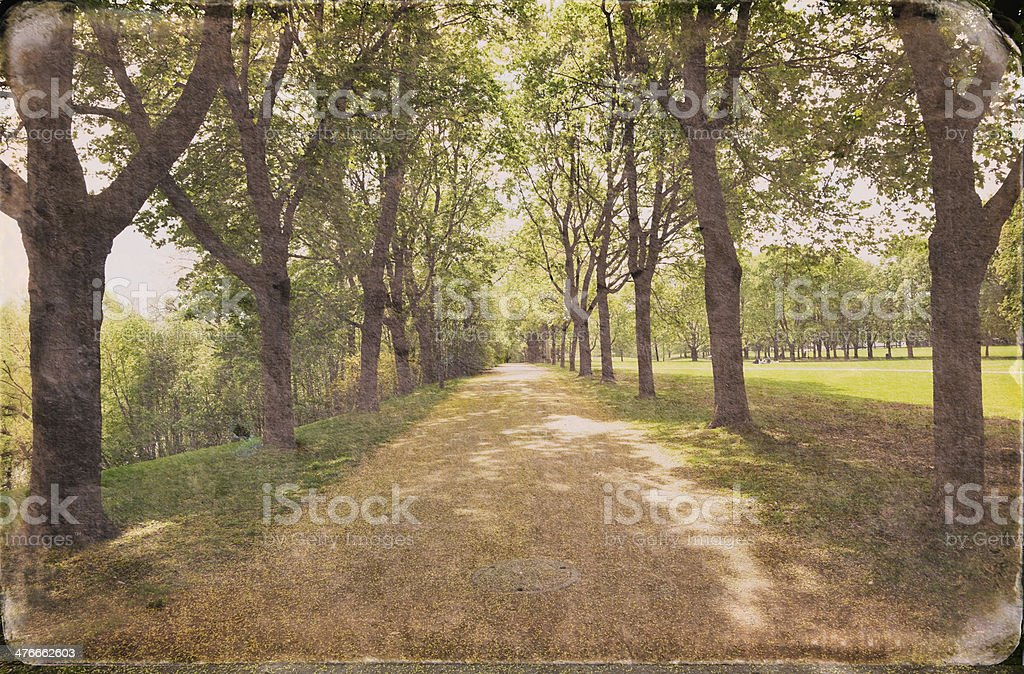 Avenue of trees in fall. royalty-free stock photo