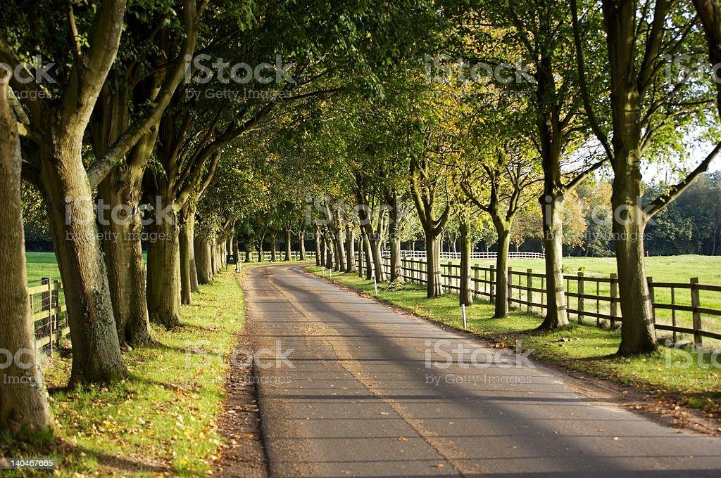 Avenue of Trees. stock photo