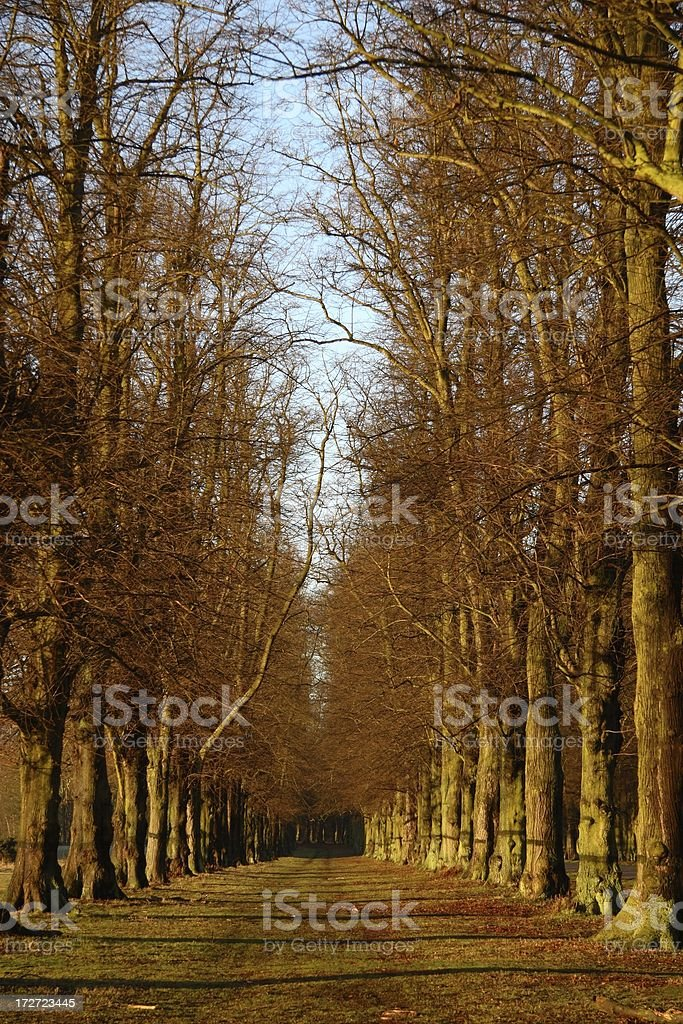 Avenue of trees royalty-free stock photo