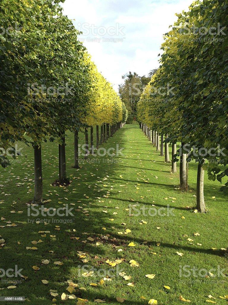 Avenue Of Trees stock photo