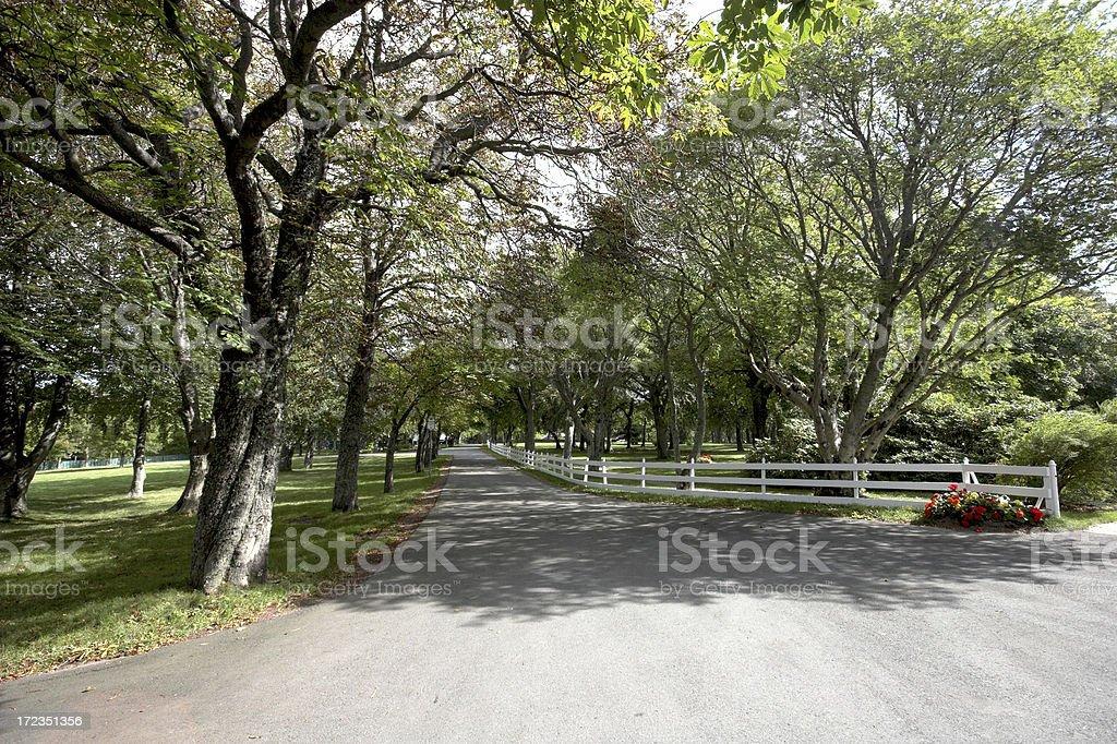 Avenue royalty-free stock photo
