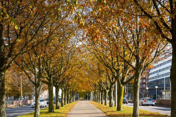 Allee mit herbstlichen Bäumen – Foto