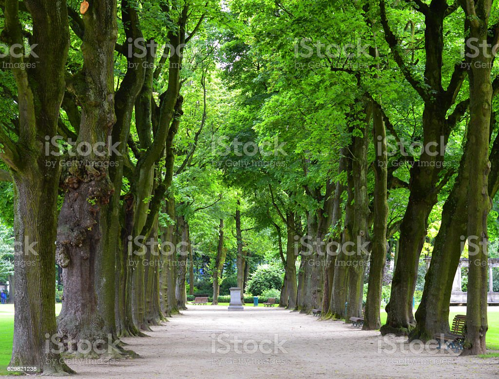 Avenue with lush green trees stock photo