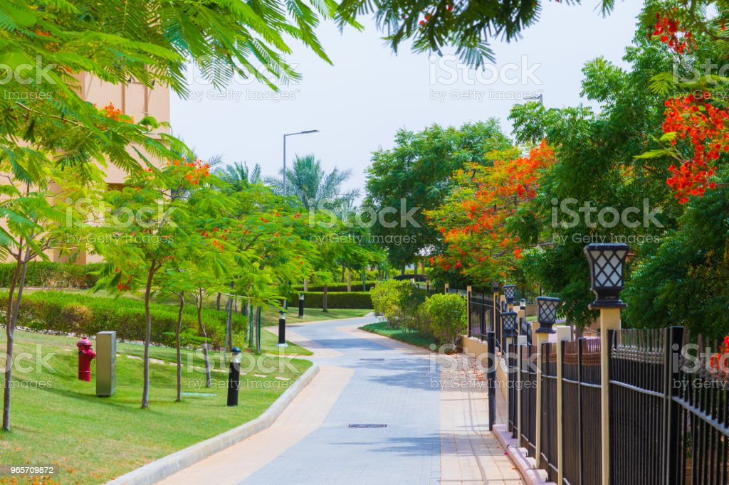 avenue with palm trees - Royalty-free Architecture Stock Photo