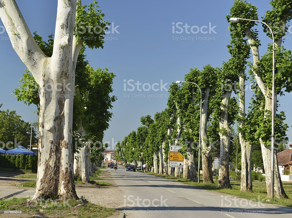 avenue with trees royalty-free stock photo
