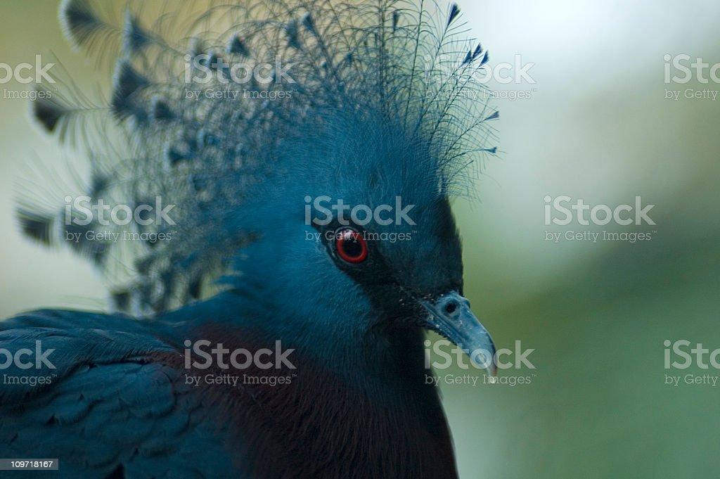Avian eye, exotic plumage stock photo