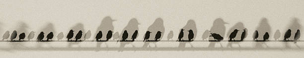 Avian shadows and sillouettes stock photo