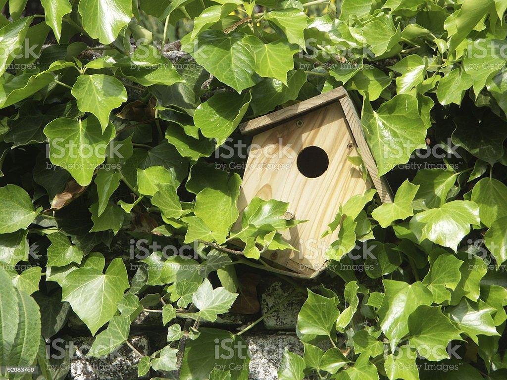 aviary on ivy-grown wall royalty-free stock photo