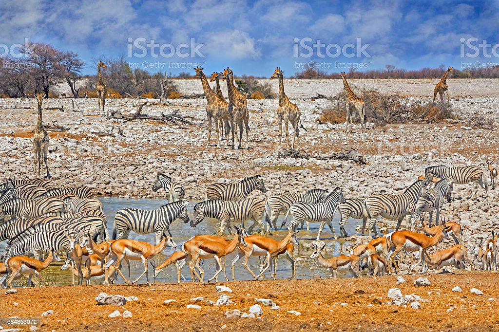 Avibrant waterhole in Etosha National Park stock photo