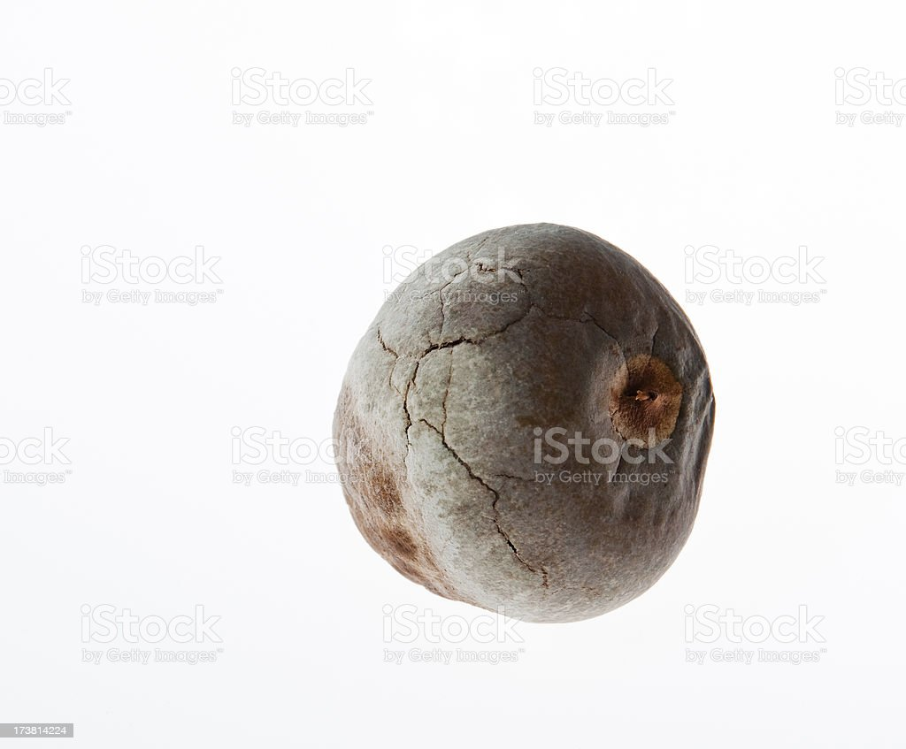 Avocado seed royalty-free stock photo