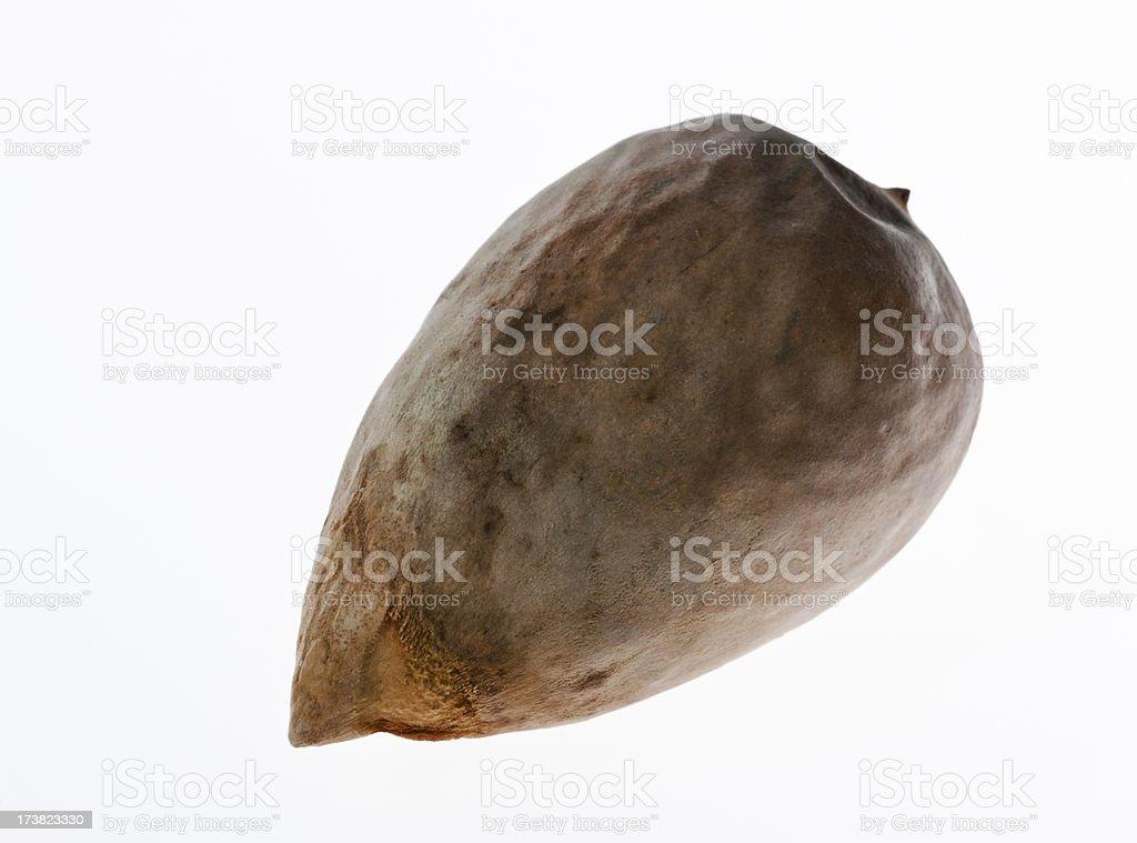 Avocado seed royalty-free stock photo