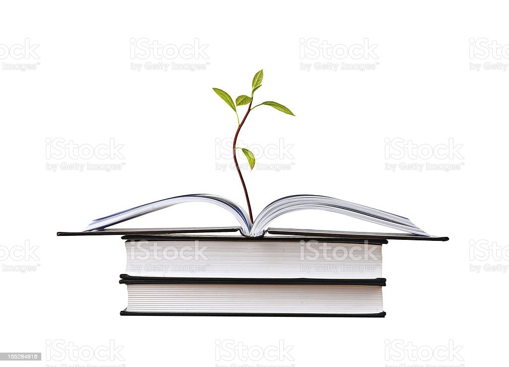 Avocado seedling growing from open book stock photo