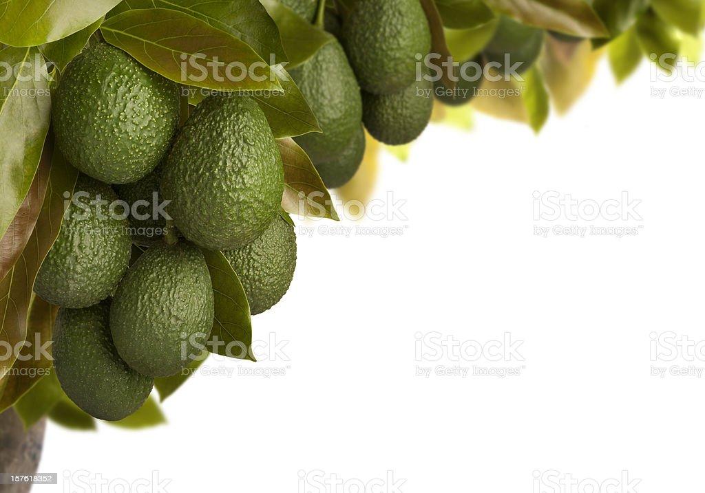 Avocados – Foto