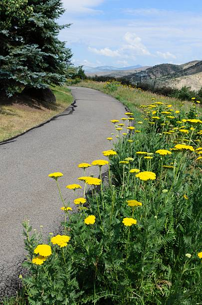 Avon Colorado Scenic Overview A path with view of beautiful Avon, Colorado in summer. avon colorado stock pictures, royalty-free photos & images
