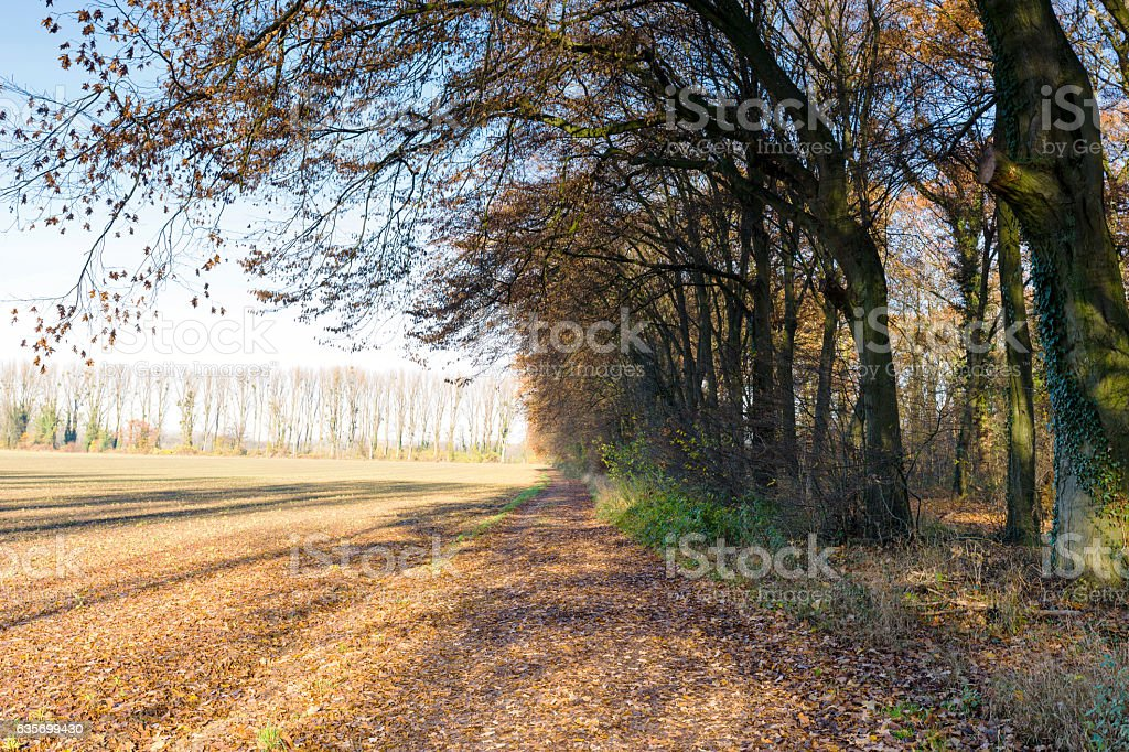 Awesome Alley at Duesseldorf/ Germany royalty-free stock photo