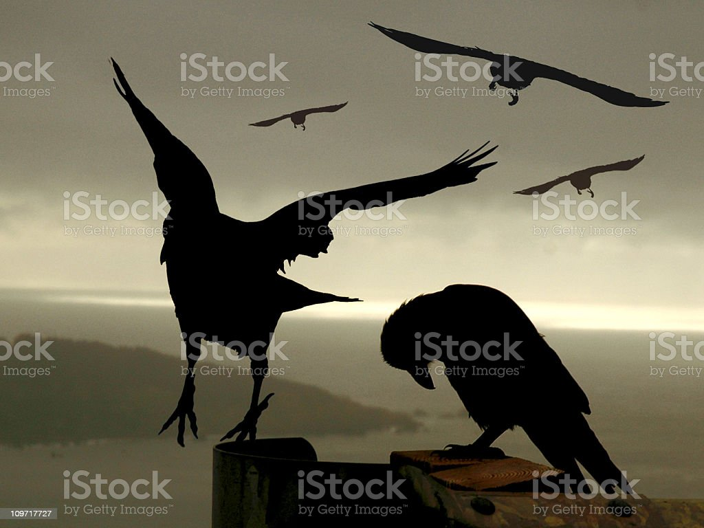 Awesome Crows stock photo