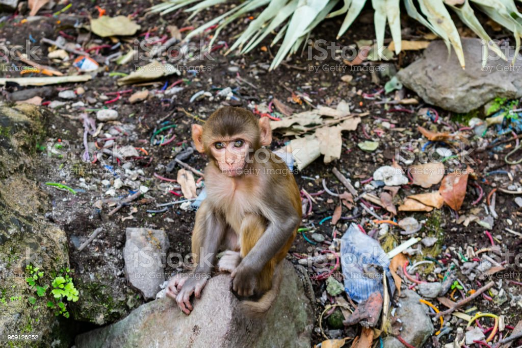Awesome snap of small kid monkey that sitting on a stone & looking towards camera with curiosity. stock photo