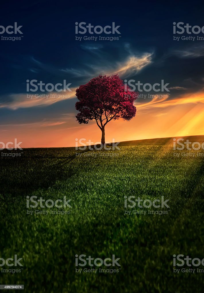 Awesome Solitude stock photo
