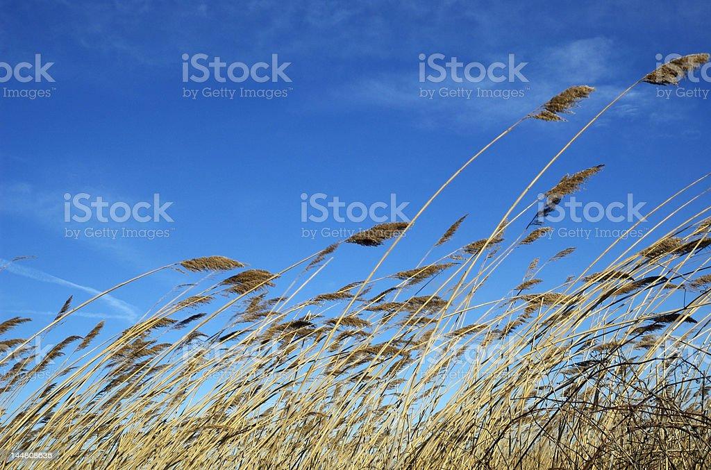 Awn under wind stock photo