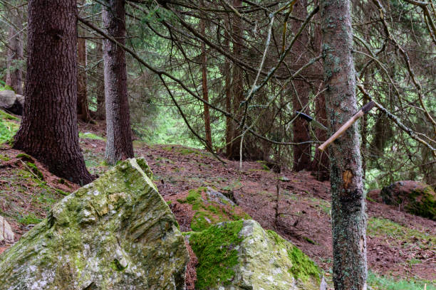 Axt im Wald – Foto