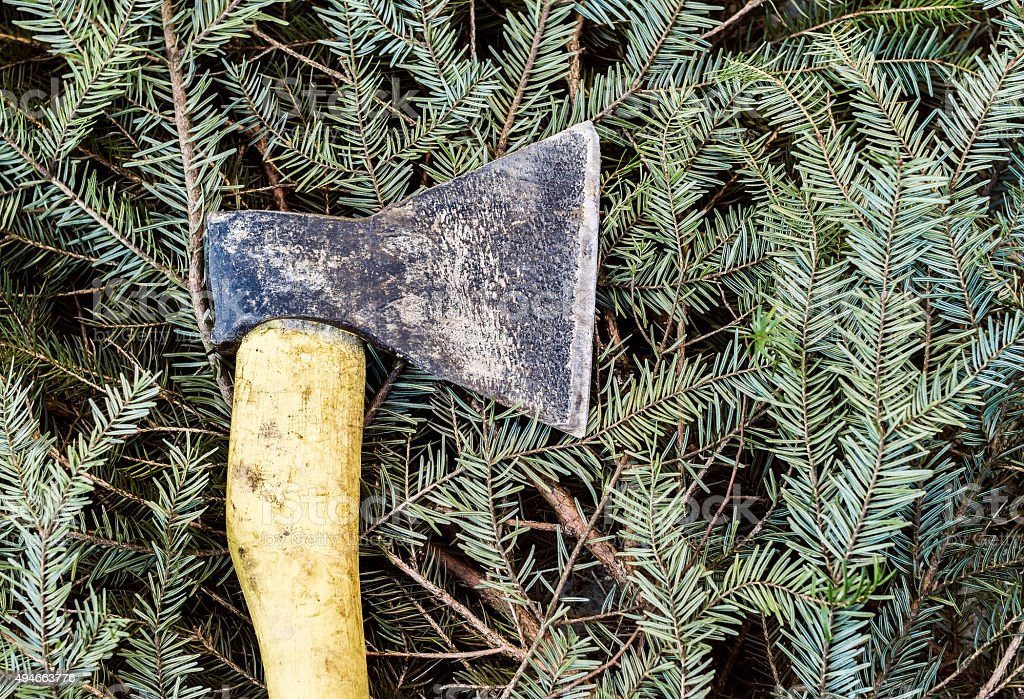 Axe on cut down spruce branches stock photo