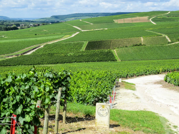 Ay, Champagne, France Ay, Champagne, France - 11 August 2014:  Hills covered with vineyards in the wine region of Champagne, France. Moet & Chandon moët & chandon stock pictures, royalty-free photos & images