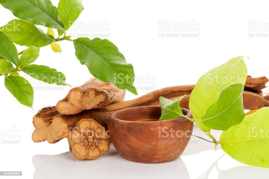 Ayahuasca medicine. stock photo