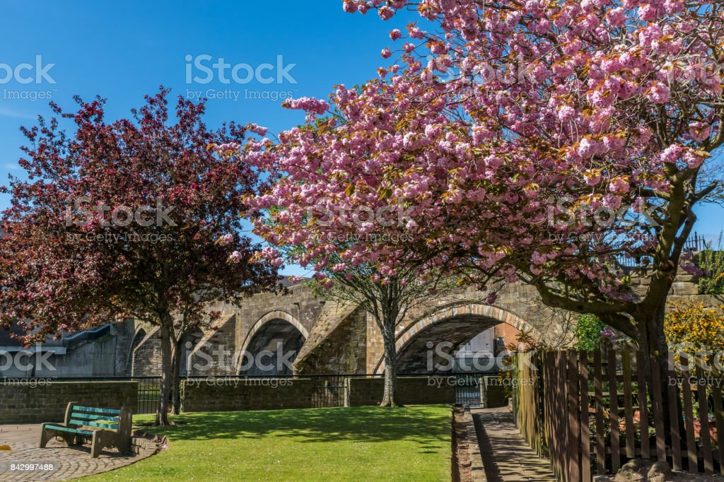 Ayr Auld Brig and blossoms. stock photo