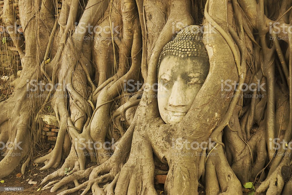 A stone Buddha head entwined in tree roots at Wat Phra Mahathat,...