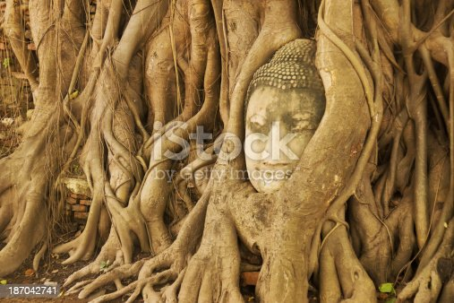 A stone Buddha head entwined in tree roots at Wat Phra Mahathat, Ayuthaya, Thailand.