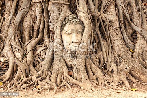 Ayutthaya, Thailand - Stone budda head traped in the tree roots at Wat Mahathat