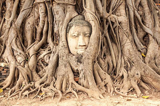 Ayutthaya, Thailand-Buddha Gesicht in the tree – Foto