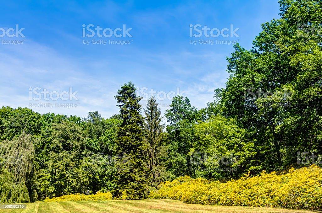 Azalea and Rhododendron Park Kromlau stock photo