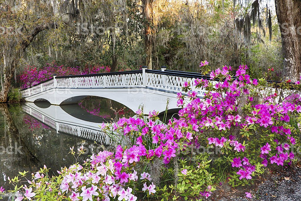Azalea Bridge stock photo