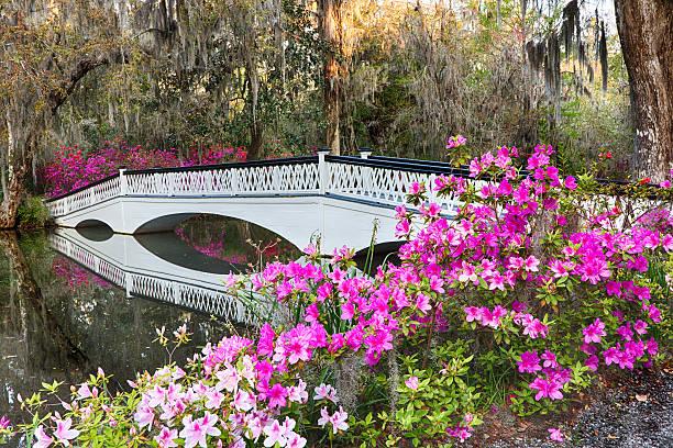 азалия мост - magnolia стоковые фото и изображения