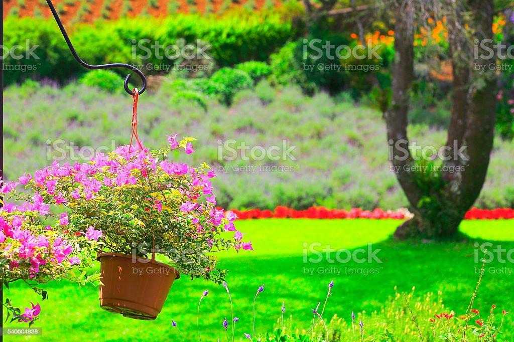 Garten Provence azalee farbenfrohen blumentopf lavendel garten provence frankreich