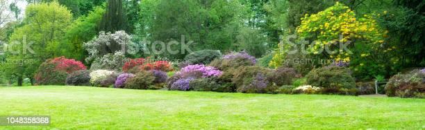 Photo of Azalea garden large panorama