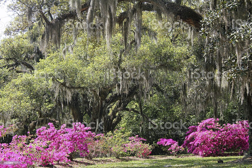 Azalea Garden stock photo