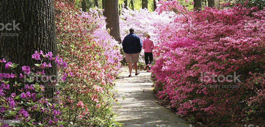 Azalea Garden Stroll stock photo