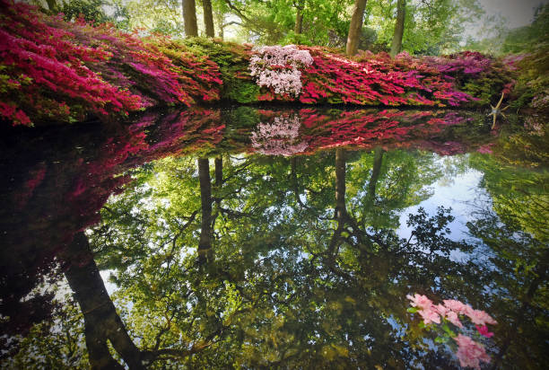 azalea pond - richmond park stock photos and pictures
