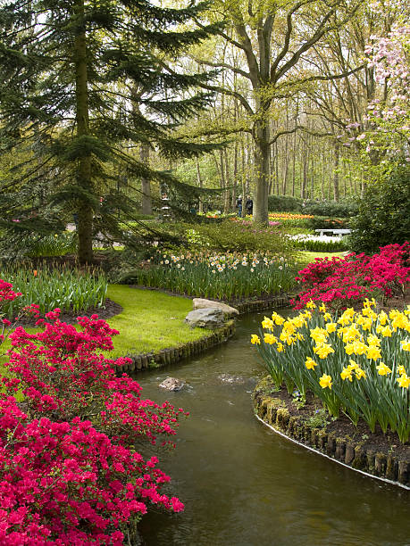 azaleias e fluxo - jardim do eden - fotografias e filmes do acervo