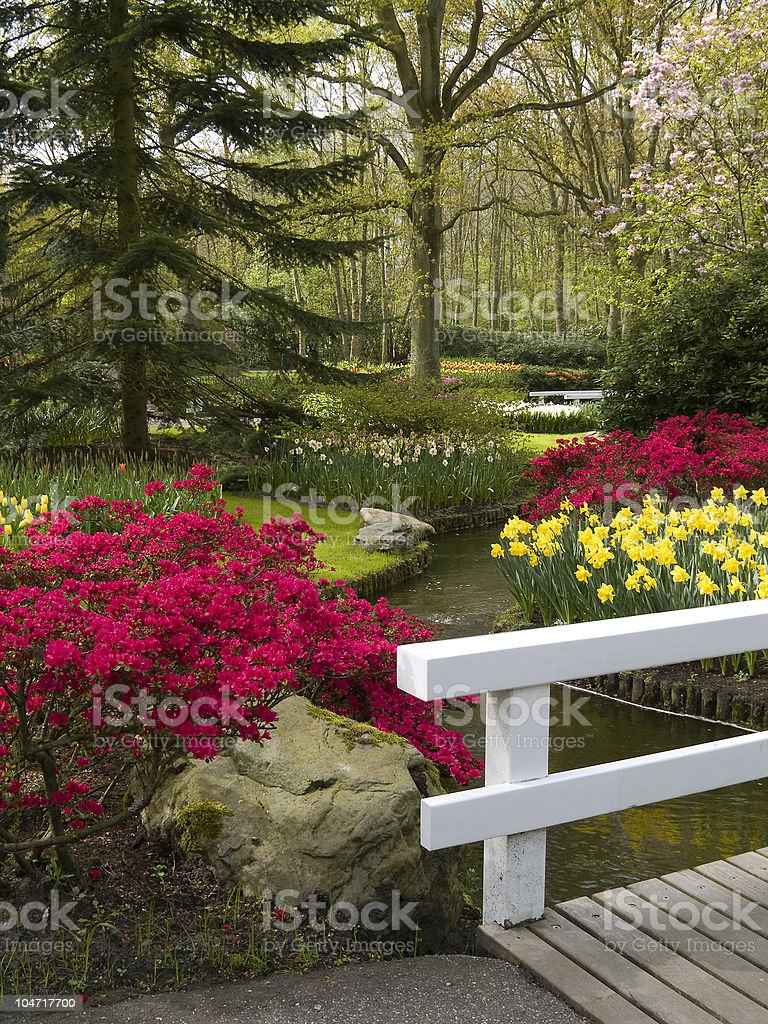 Azaleas royalty-free stock photo