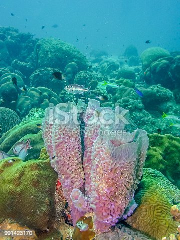 Azure Vase Sponge Stock Photo More Pictures Of Animal Istock